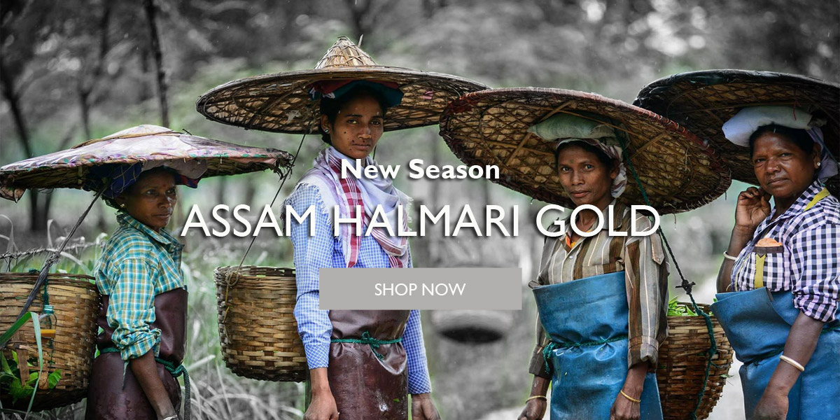 teafields-tfhag-halmari-gold-05